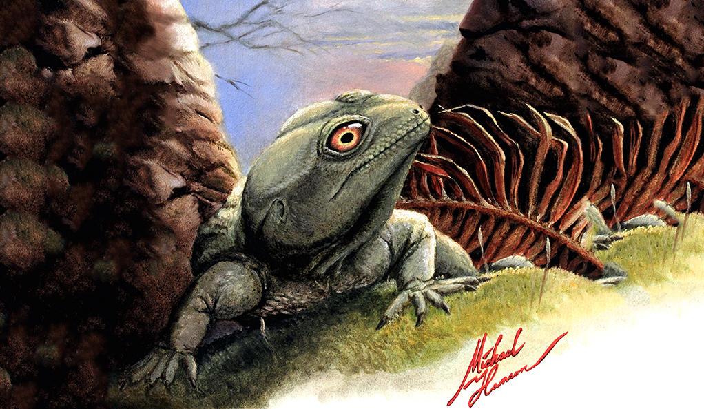 Ящерица Colobops noviportensis, иллюстрация Michael Hanson.