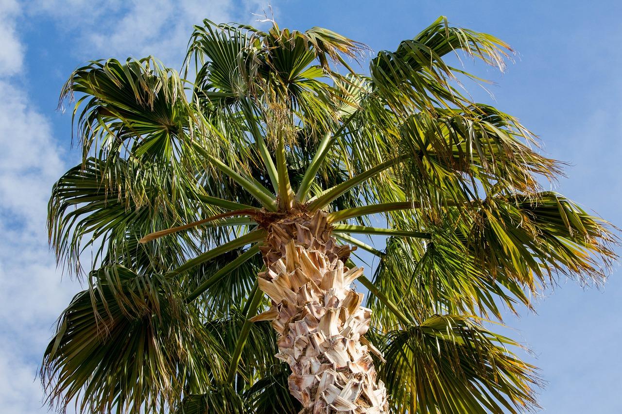 Palm 3243996 1280
