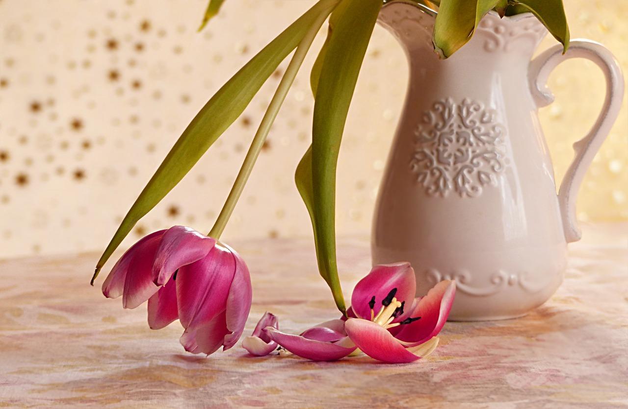 тюльпан, цветок, увядать