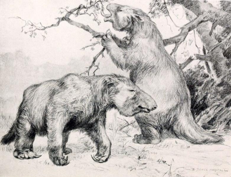Рисунок гигантского ленивца
