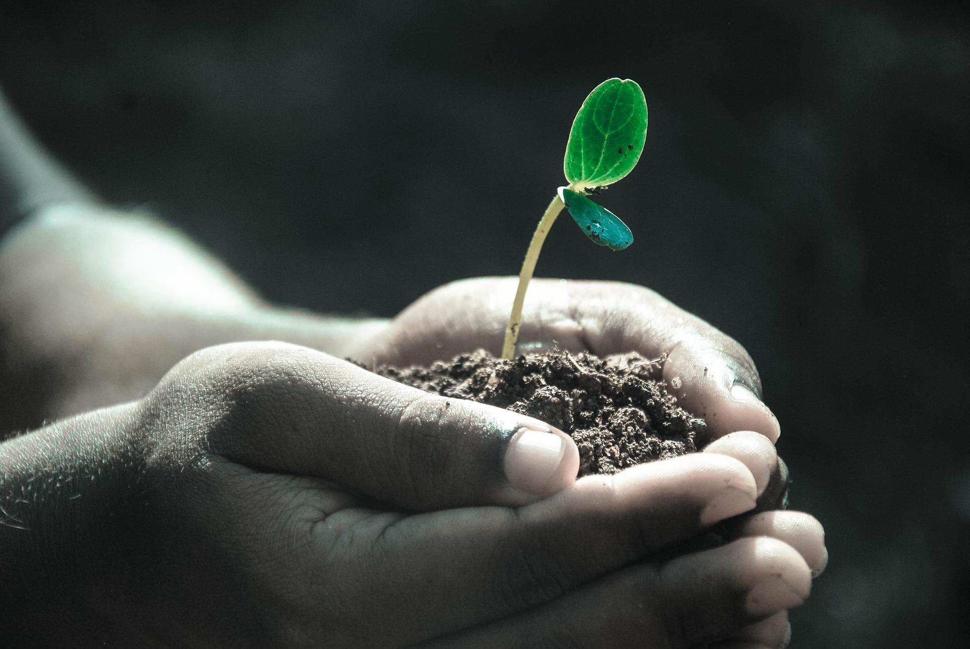 почва и растение