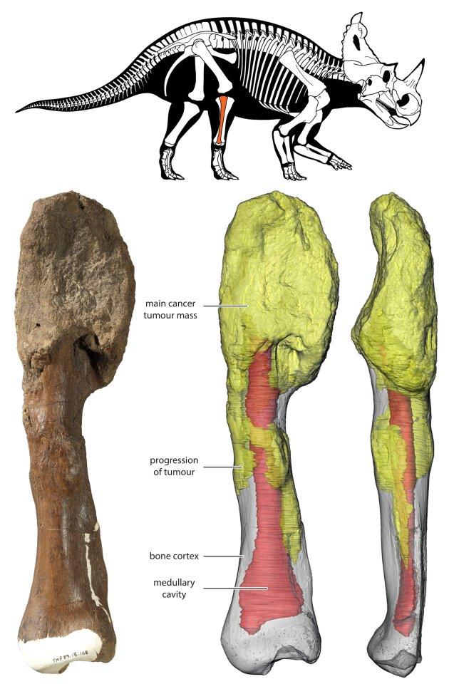 Динозавр 75 миллионов лет назад заболел раком, но погубила его не опухоль