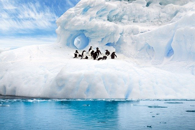 В Антарктиде нашли колонию пингвинов